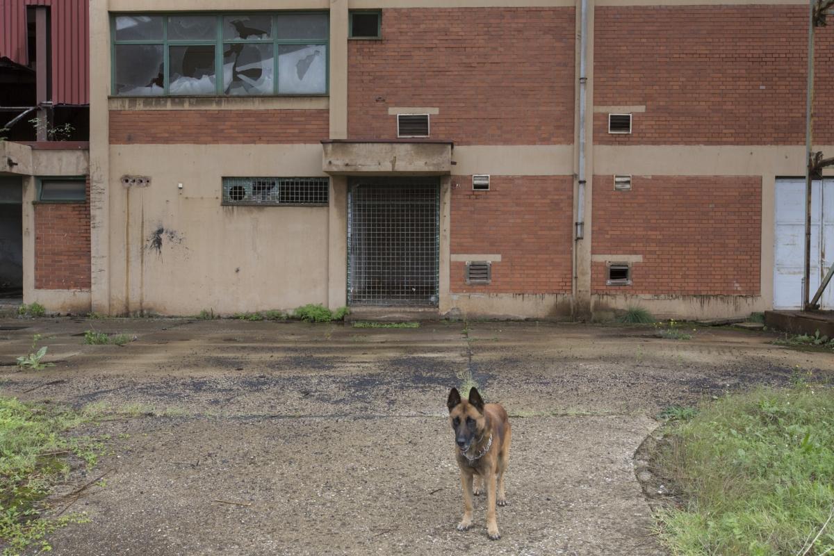 Sisak-reperage-dog-3372